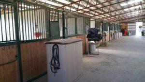Rowdy Ranch Horse Boarding